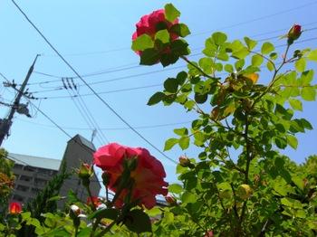Blog25_003_4