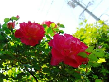 Blog25_004_2